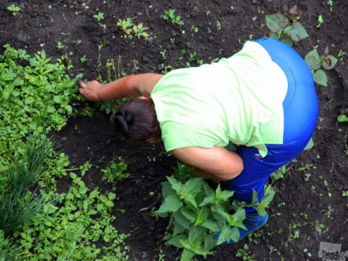 Фото в огороде раком 34251 фотография