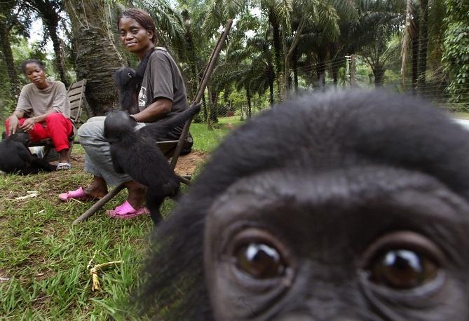 13 datos curiosos sobre los monos