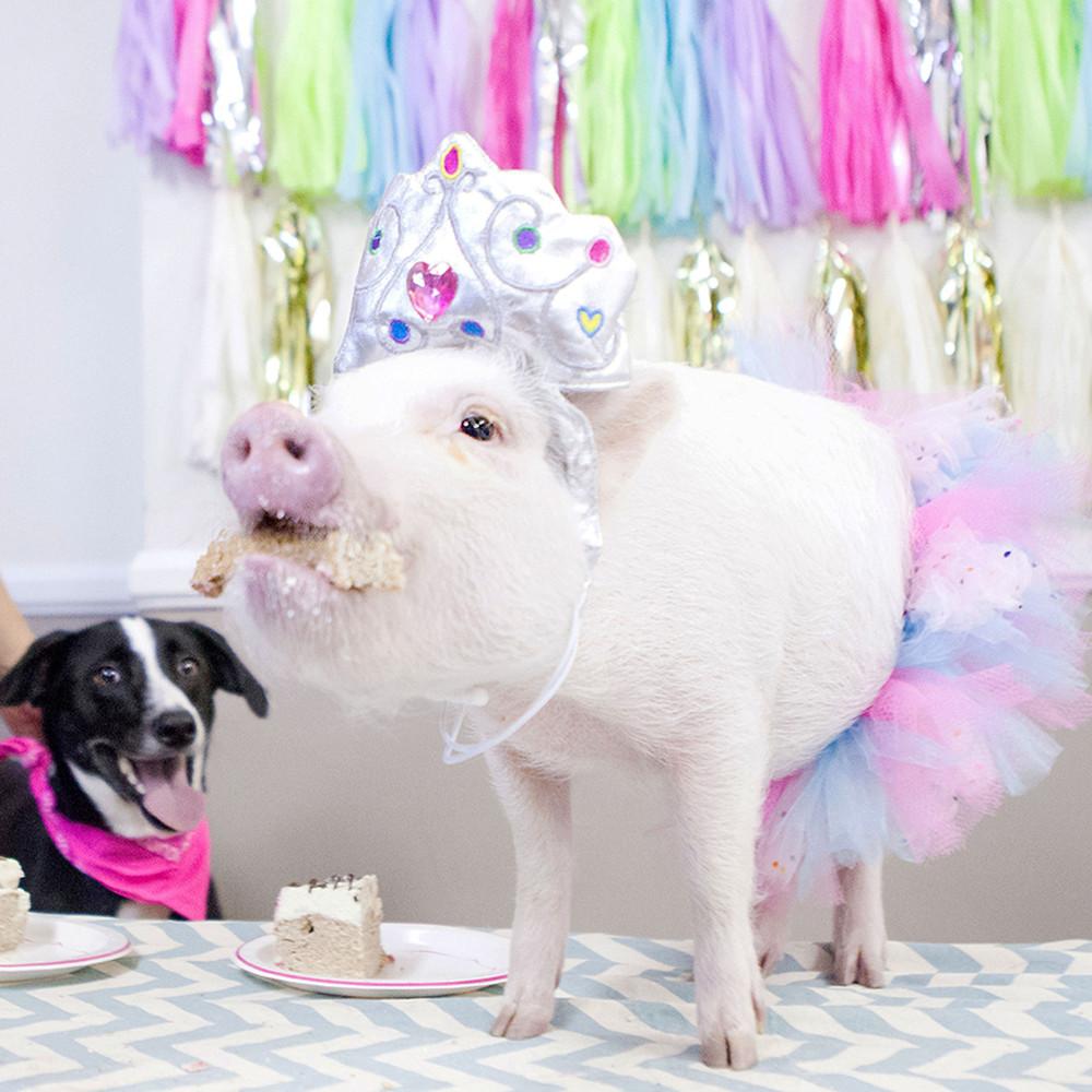 Картинки с днем рождения свинья