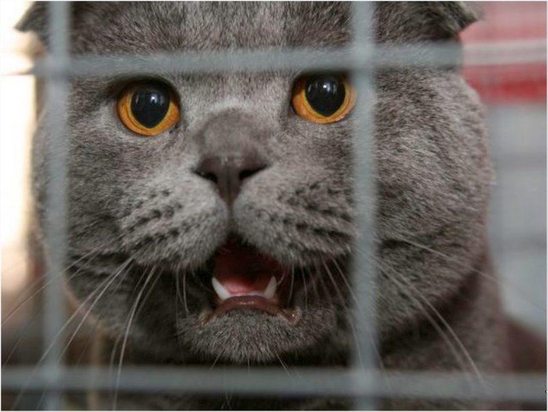 Residentes de Barnaul acusaron a un gato de robar electricidad