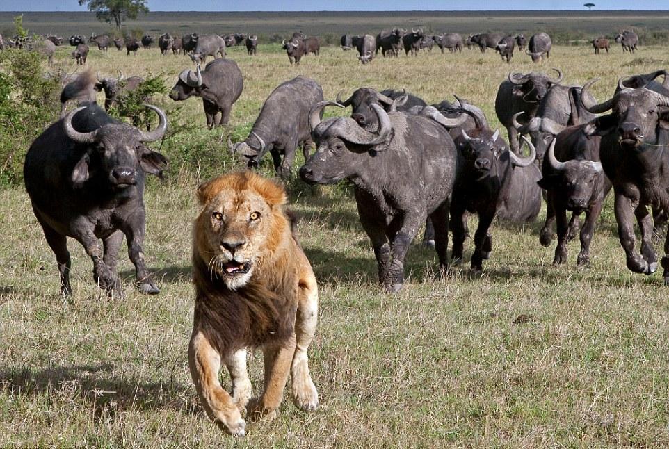 картинки животные толпой себе