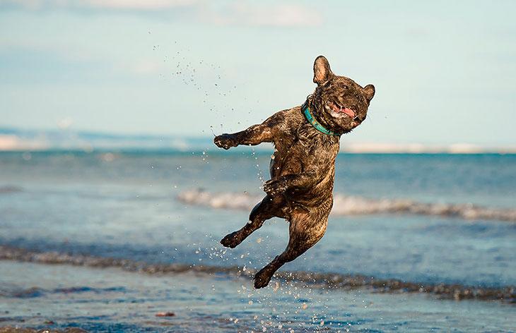 Вот и пятница картинки с собаками