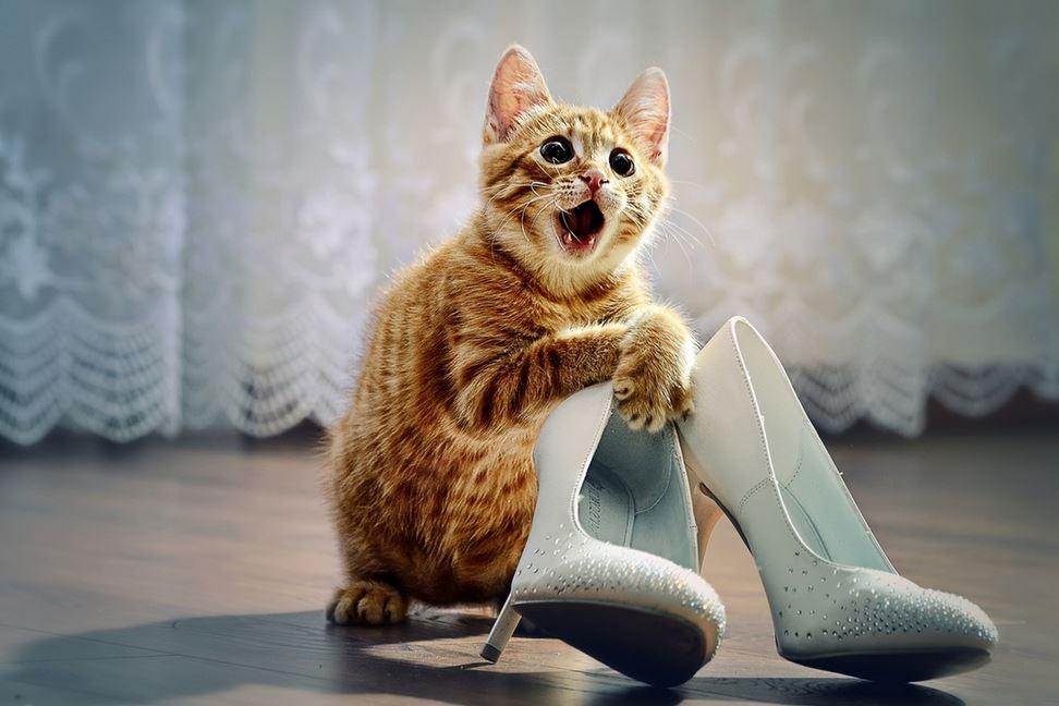 смешные картинки только про кошек многом