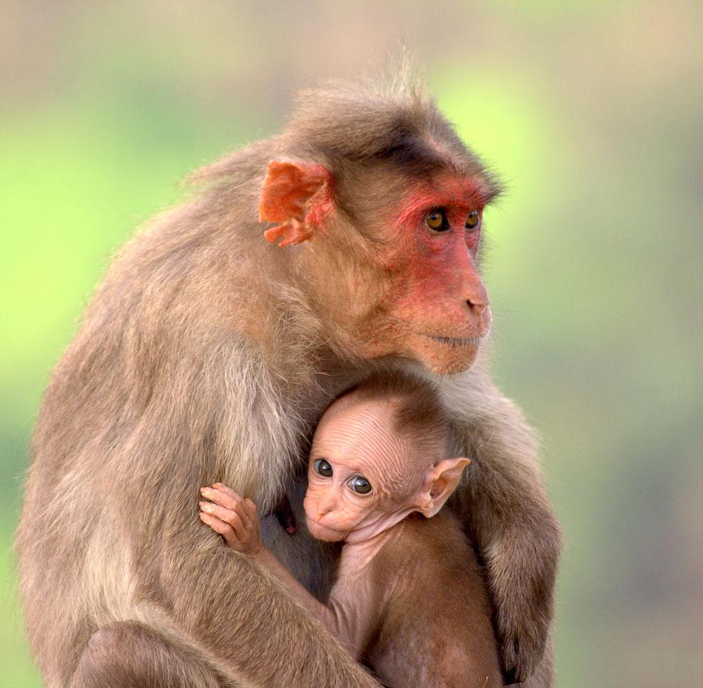 блюда картинки с мамами и детенышами животных только самый крупный