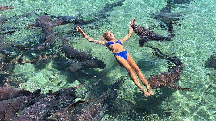 Попытка сделать фотографию с акулами пошла не по плану