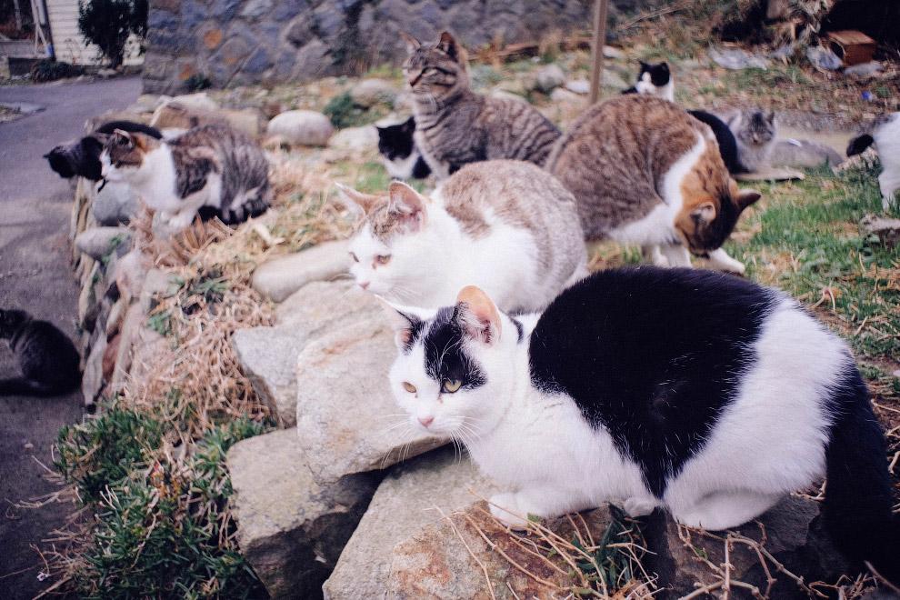 Tashiro, or Cat Island