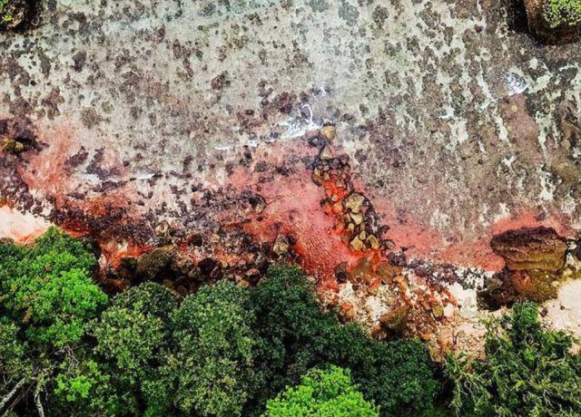 Розовые пятна покрыли остров Рождества в Индийском океане