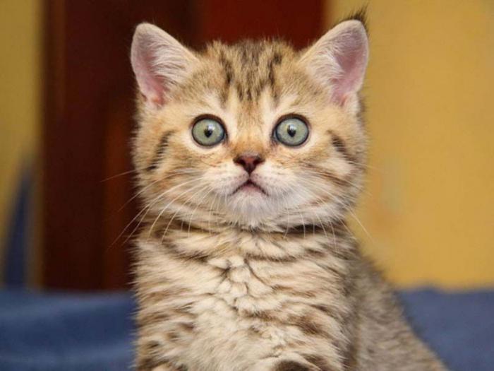 http://24warez.ru/uploads/posts/141112/Animals_05.jpg