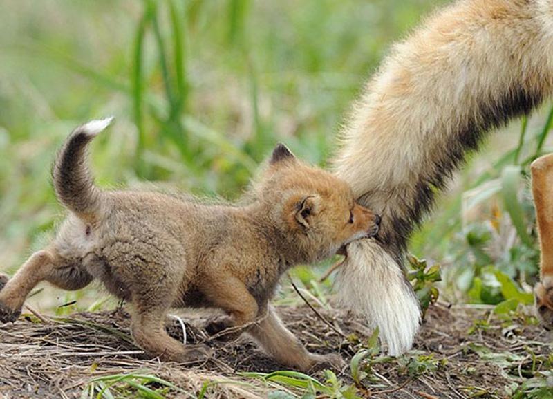 кабинет картинки про животных с детенышами удовольствием принимает