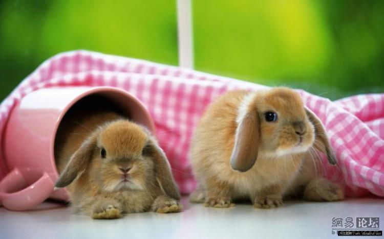 Уход за зайчиком в домашних условиях