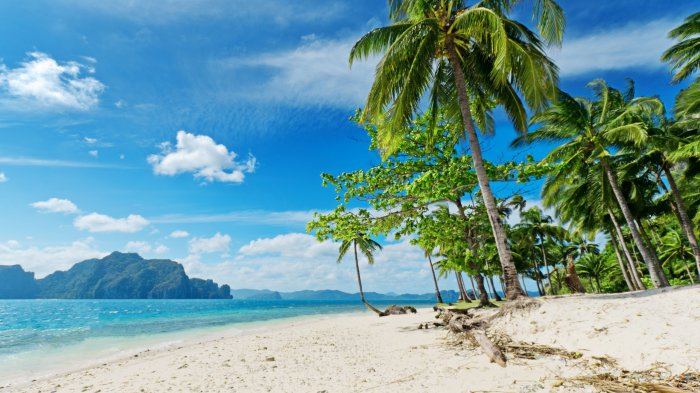 Фото пляжа и пальмы с морем