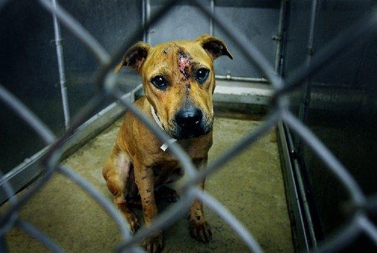 подбирать чем грозит жестокое обращение с животными печатка