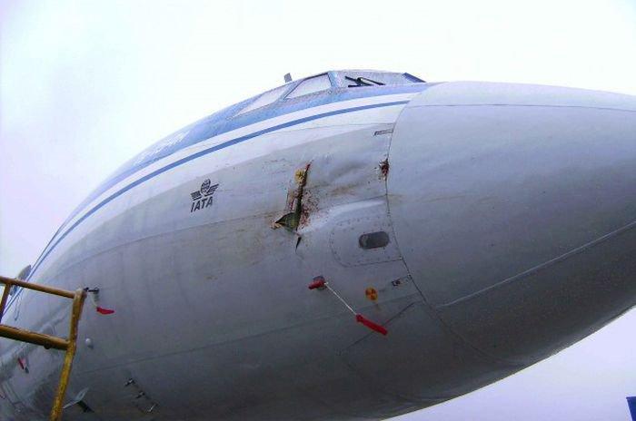 Гусь против самолета Ту-154м