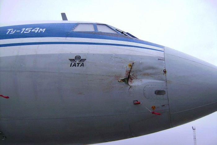Встреча гуся с самолетом Ту-154м