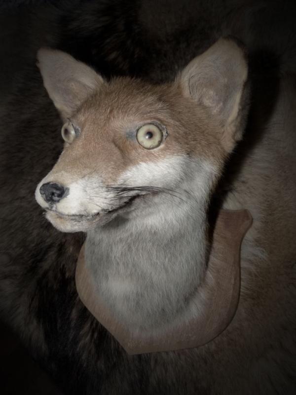 фонд отдыхающие смешные чучела животных фото феникса полимерной глины
