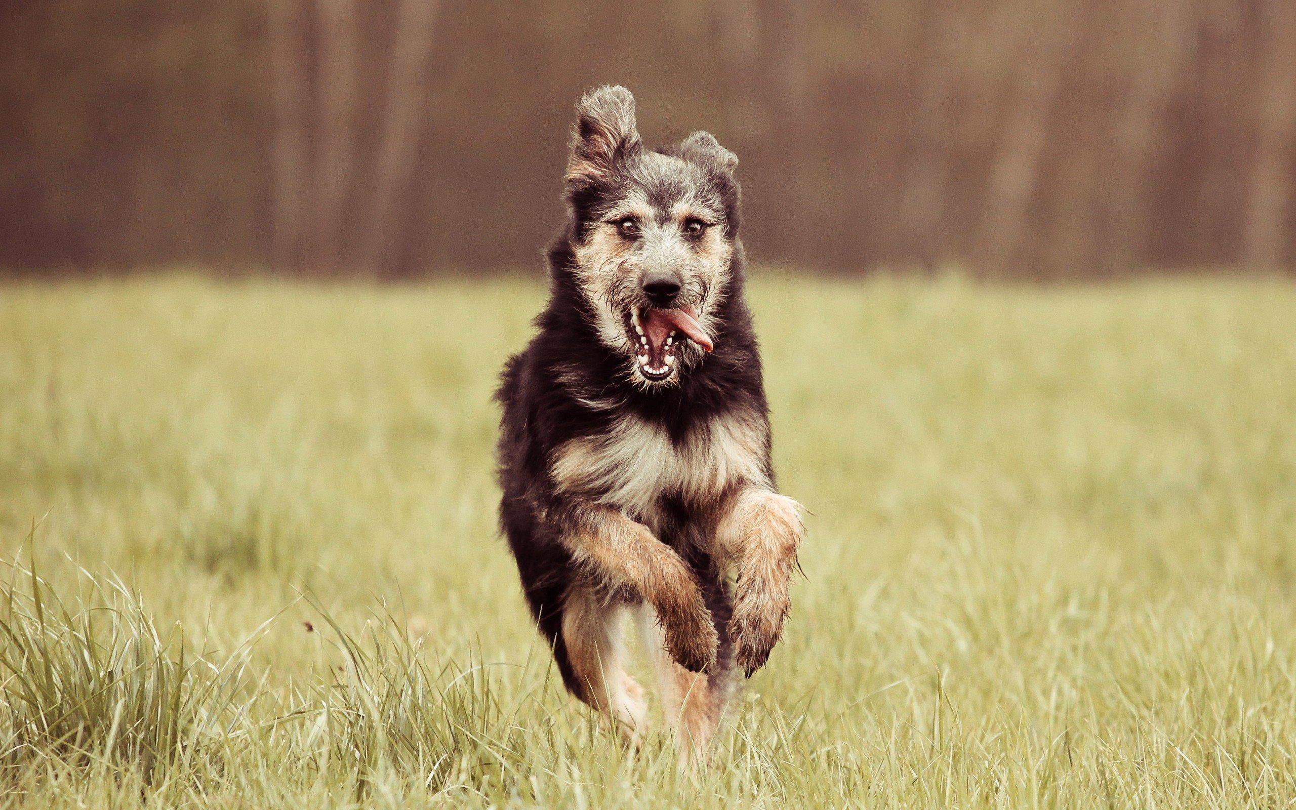 The smartest dog breeds 24Warez.Ru 39