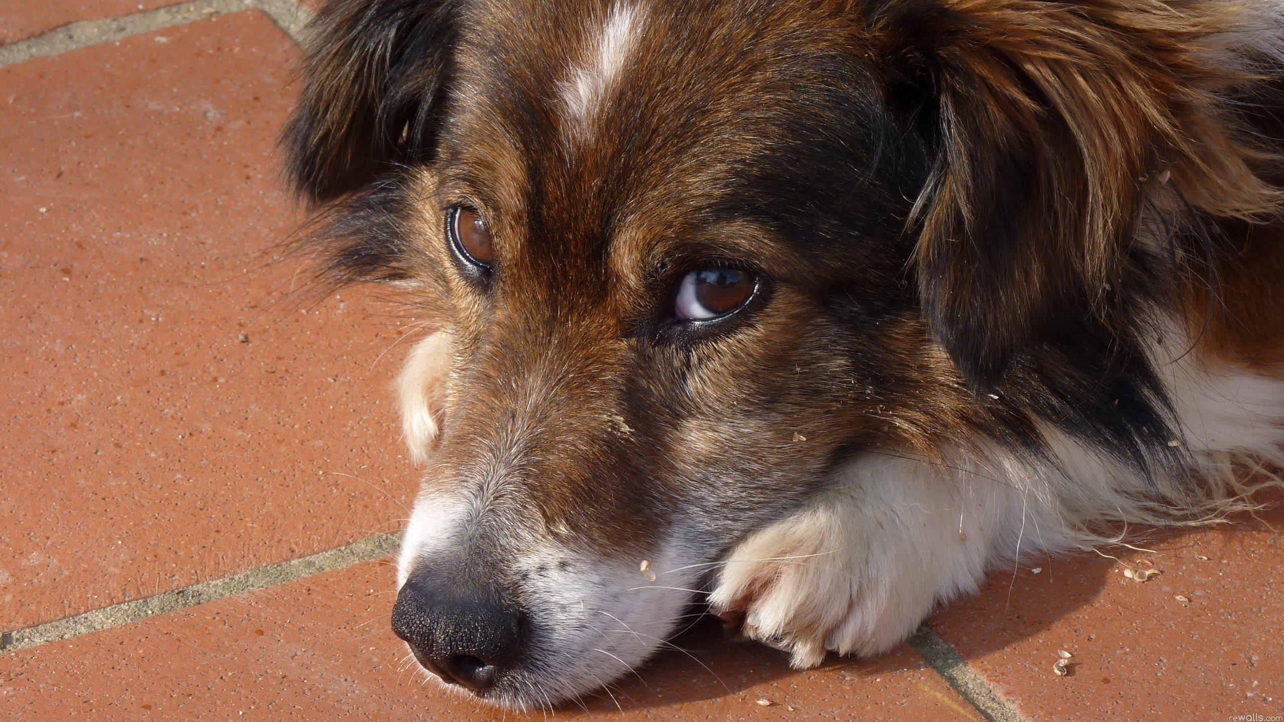 The smartest dog breeds 24Warez.Ru 55