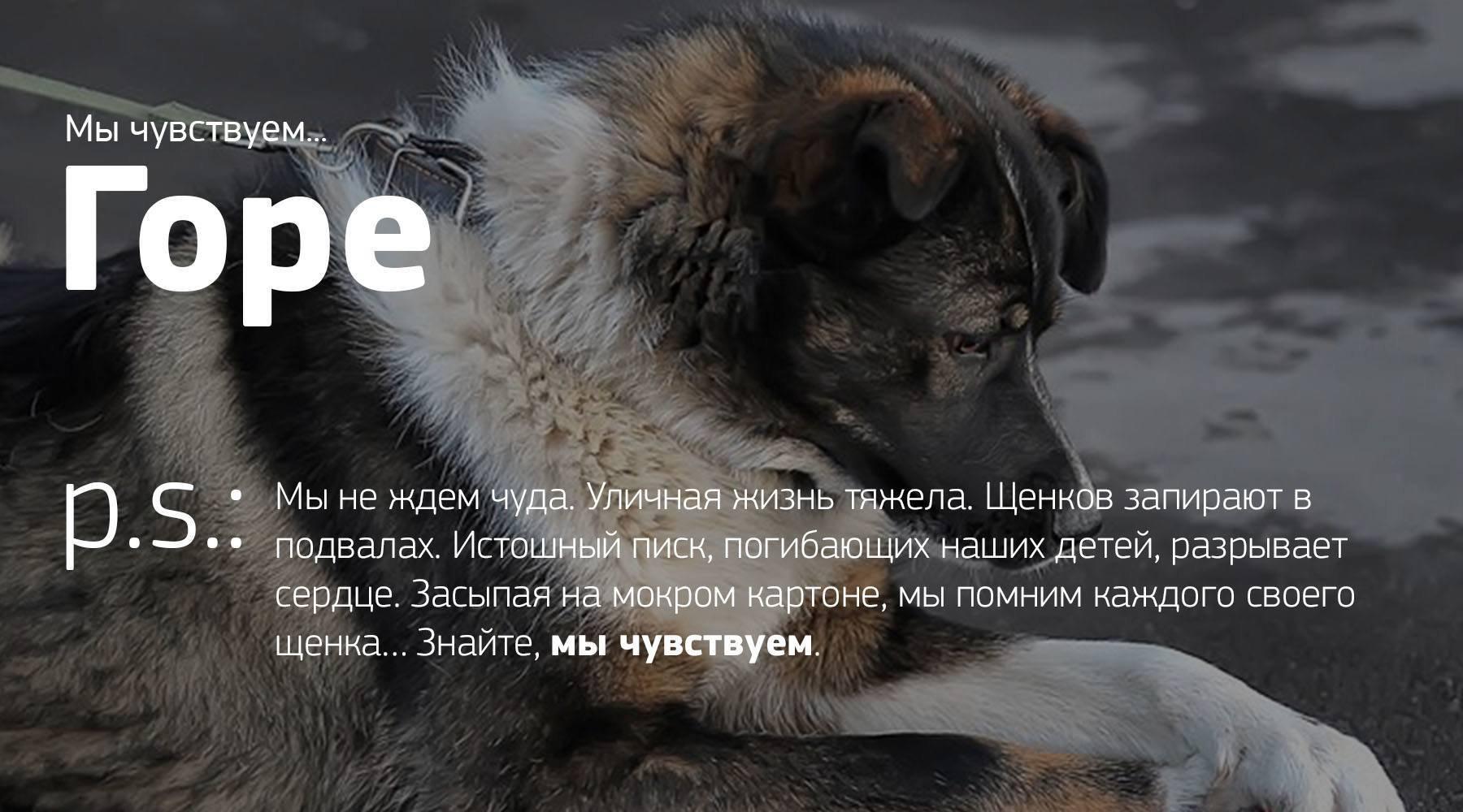 при картинки об утрате собаки касается малышек, рекомендуют