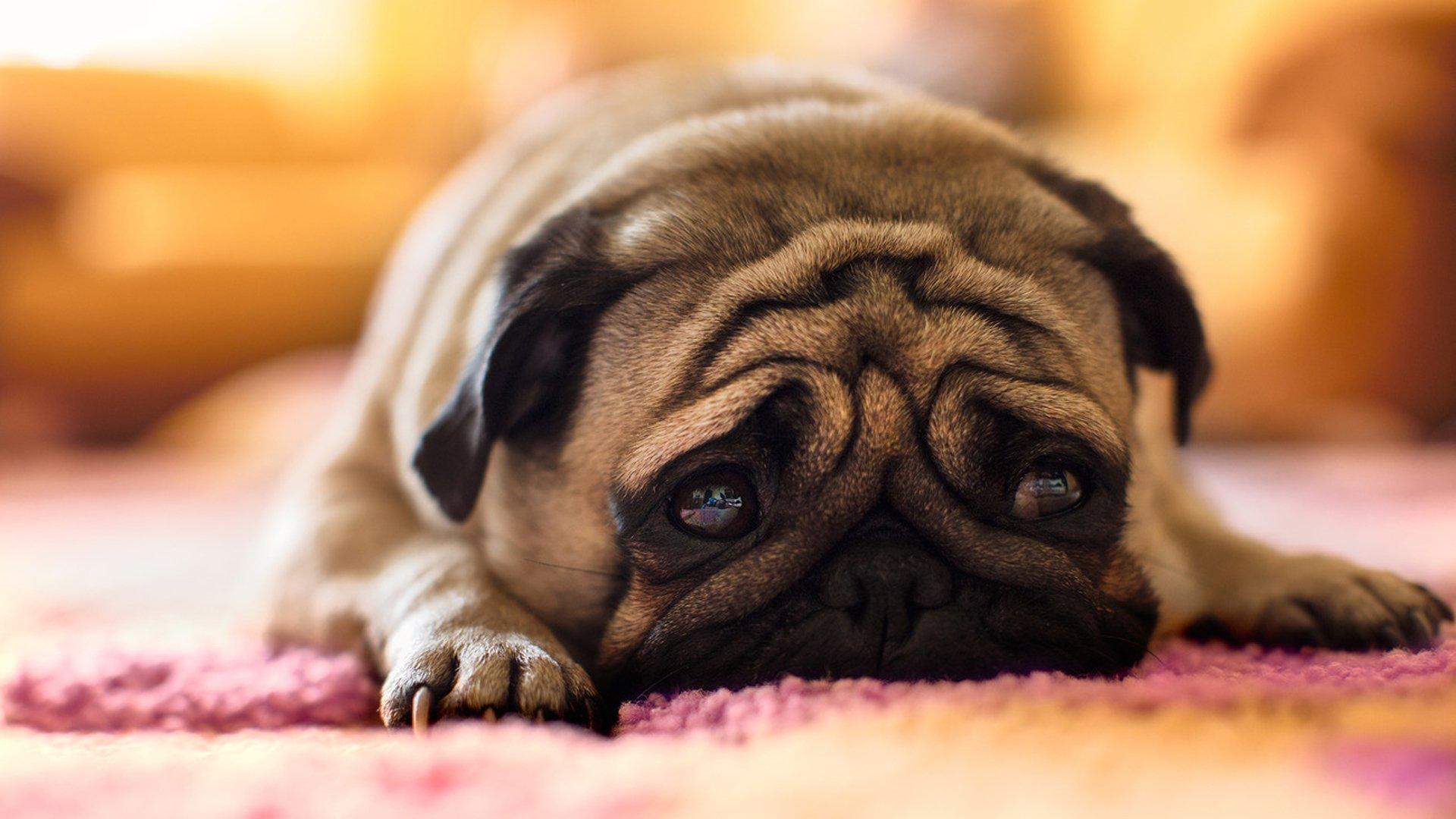 The smartest dog breeds 24Warez.Ru 26