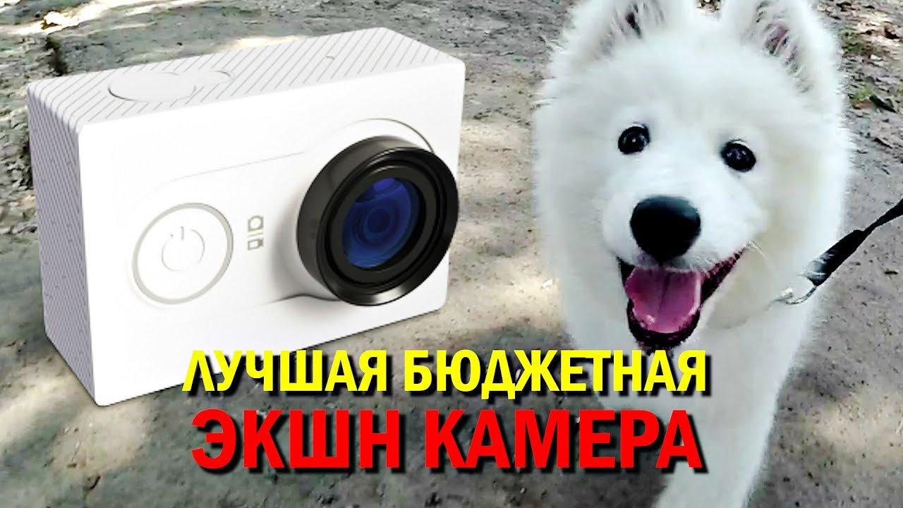 The smartest dog breeds 24Warez.Ru 67