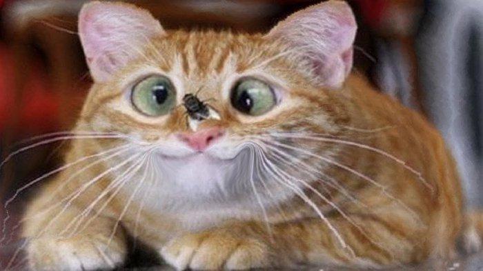 Смешные животные, коты собаки и другие