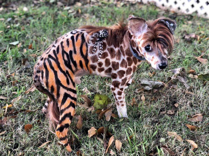 картинки окрашенных животных