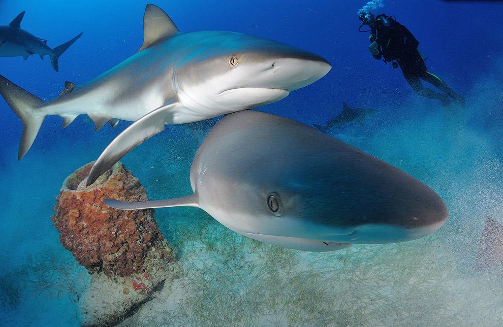 подводный мир акулы фото перец клаудио