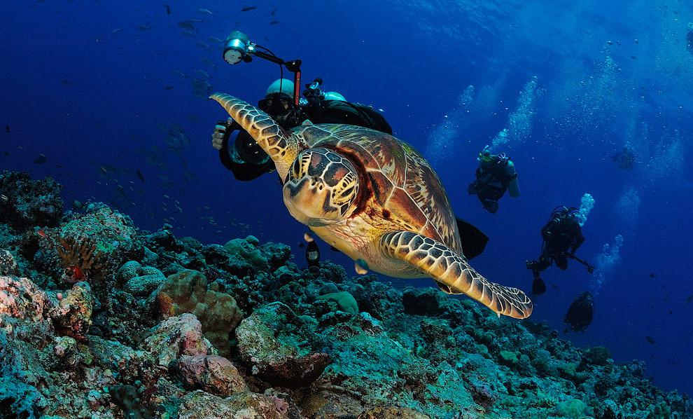 кого картинки океан и его обитатели считается