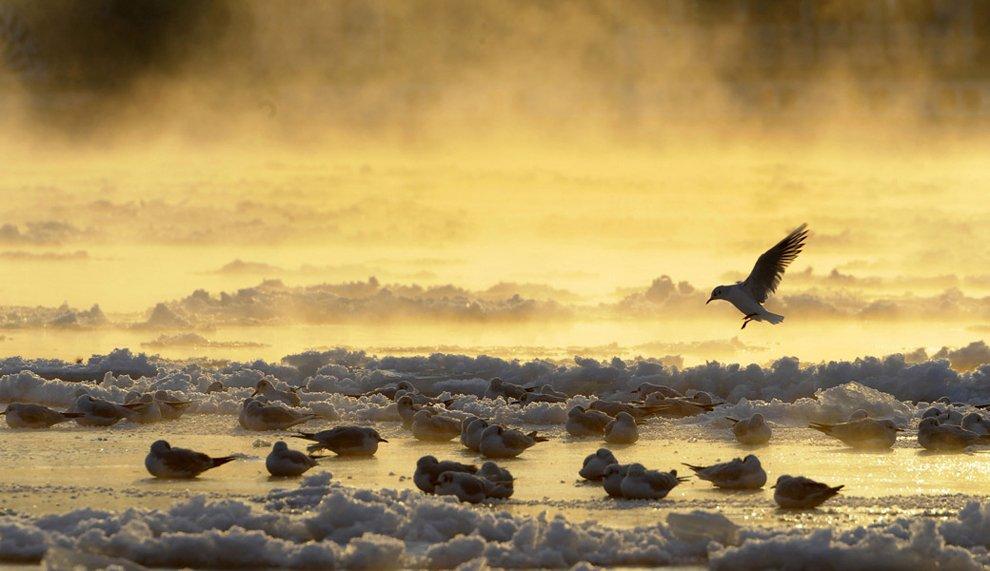 La belleza de la naturaleza en 2012.
