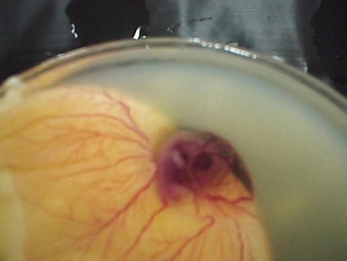 Яйца в рот 6 фотография