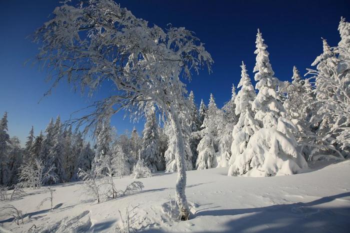 цветом картинки зима на урале листьях все