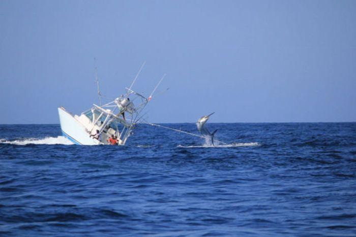 рыболовное судно сонник