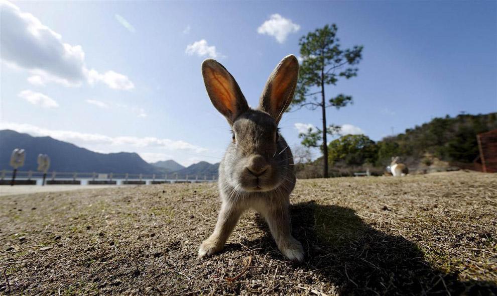 твой Законы в японии о животных тщательно осмысливал
