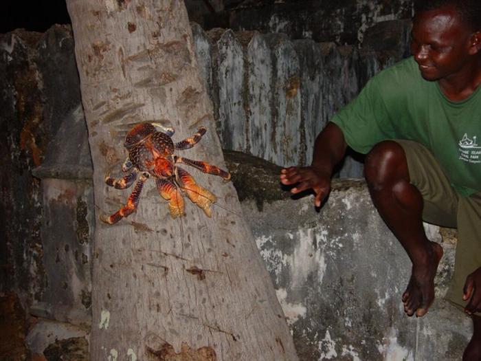 Cangrejo de coco